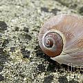 Sea Shell by Alana Ranney