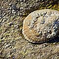 Sea Shell Rock by Kelley King