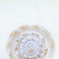 Sea Shell by Stephanie Frey
