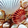 Sea Shells by Amar Sheow