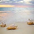 Sea Shells At Sunset by Nersibelis Photography