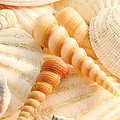 Sea Shells by Joe Mamer