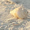 Sea Shells by Kim Hojnacki
