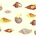 Sea Shells by Michael Vigliotti