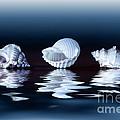 Sea Shells On Water by Konstantin Sutyagin
