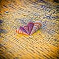 Sea Shells by Stelios Kleanthous