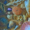 Sea Shells by Tom Druin