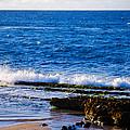 Sea Shelves by Christi Kraft