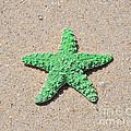 Sea Star - Green by Al Powell Photography USA