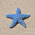 Sea Star - Light Blue by Al Powell Photography USA