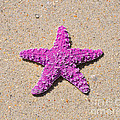 Sea Star - Pink by Al Powell Photography USA