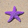 Sea Star - Purple by Al Powell Photography USA
