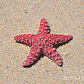 Sea Star - Red by Al Powell Photography USA