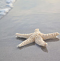 Sea Star by Samantha Leonetti