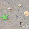 Sea Swag - Green by Al Powell Photography USA