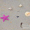 Sea Swag - Pink by Al Powell Photography USA