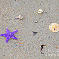 Sea Swag - Purple by Al Powell Photography USA