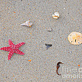 Sea Swag - Red by Al Powell Photography USA