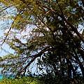 Sea Through Trees by Amar Sheow