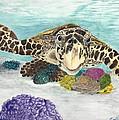 Sea Turtle Hello by Toni Willey
