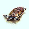 Sea Turtle II by Ann Powell