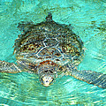 Single Sea Turtle Swimming Through The Water by Jessica Foster