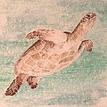 Sea Turtle by Kathy Carothers
