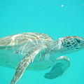 Sea Turtle Time by Catie Canetti