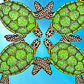 Sea Turtles by Betsy Knapp