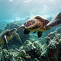 Sea Turtles by M Swiet Productions