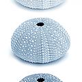 Sea Urchins Blues Vertical by Jennie Marie Schell