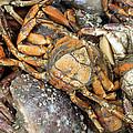 Seafood by Steve K