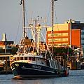 Seafox At Sunset by Veronica Vandenburg