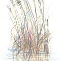 Seagrass 1 by Paul Shafranski