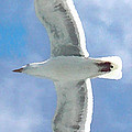 Seagull 3 by Marcello Cicchini