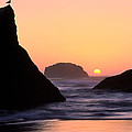 Seagull And Sunset by Inge Johnsson