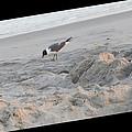 Seagull by April Lerro