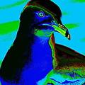 Seagull Art 2 by Ben Upham III