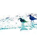 Seagull Art - On The Shore - By Sharon Cummings by Sharon Cummings