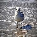 Seagull At Low Tide by Tara Potts