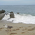 Seagull At The Sea by Adrienne Zulkoski