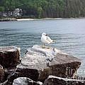 Seagull Awaits by Deb Schense