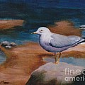 Seagull by Brenda Thour