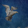 Seagull by Ernie Echols