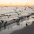 Seagulls Feasting by Robert VanDerWal