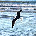 Seagull Flight by M E Wood