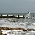 Seagull Groyne by Anne Gilbert