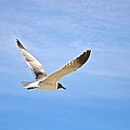 Seagull In Flight by Kristina Deane