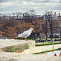Seagull In Paris by Pati Photography