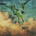 Seagull In The Clouds by Alice Gipson